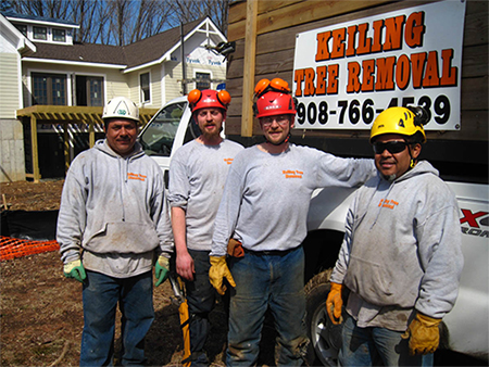 Keiling Tree Care tree care 450