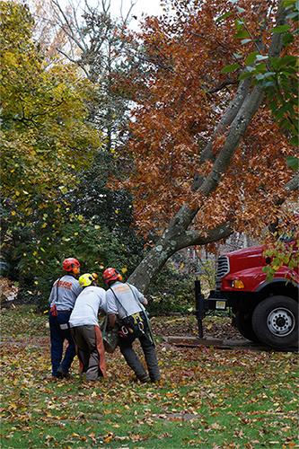 Keiling Tree Care tree removal