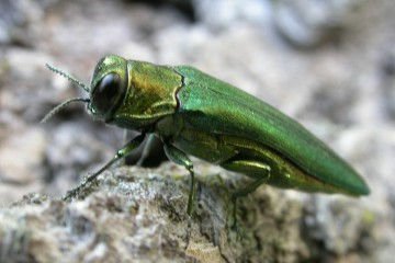 Residential Insect Management